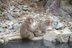 Affe im Jigokudani-Affe-Park oder Schnee-Affe Lizenzfreies Stockfoto