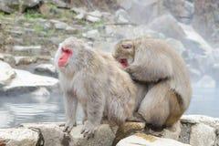 Affe im Jigokudani-Affe-Park oder Schnee-Affe Lizenzfreie Stockfotos