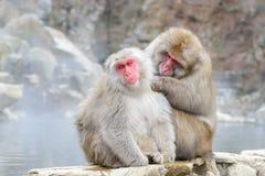 Affe im Jigokudani-Affe-Park oder Schnee-Affe Stockfotografie