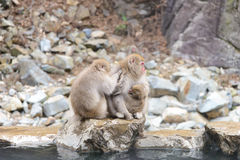 Affe im Jigokudani-Affe-Park oder Schnee-Affe Lizenzfreie Stockfotografie