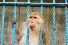 Affe im Käfig, Tierzoo Stockbild