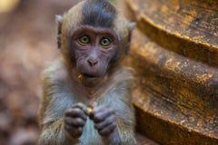 Affe im natürlichen Lebensraum, Thailand Stockfoto