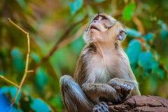 Affe im natürlichen Lebensraum, Thailand Lizenzfreie Stockbilder