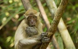 Affe im Nationalpark von Thailand Lizenzfreie Stockfotos
