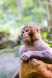 Affe im Naturwald von China Stockfotos