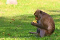 Affe im offenen Zoo, Thailand Stockfotos