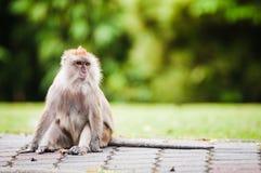 Affe im Park Lizenzfreies Stockbild