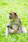 Affe im Park Stockbild