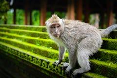 Affe im Park Stockfotografie