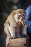 Affe im Park Lizenzfreie Stockbilder