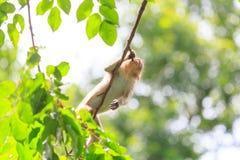 Affe im Park Lizenzfreie Stockfotografie