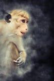 Affe im Rauche Stockbild