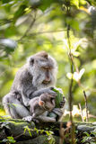 Affe im Regenwald Stockfoto