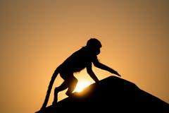 Affe im Sonnenuntergang Lizenzfreie Stockbilder