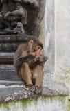 Affe im swayambhunath, Kathmandu, Nepal Lizenzfreie Stockfotos