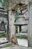 Affe im Tempel Lizenzfreie Stockfotografie