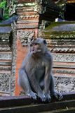 Affe im Tempel Lizenzfreie Stockfotos