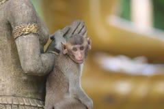 Affe im thailändischen Tempel stockbilder