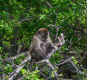 Affe im tiefen Wald lizenzfreie stockfotografie