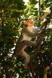 Affe im Wald Lizenzfreie Stockfotografie