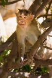 Affe im Wald Stockbild
