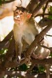 Affe im Wald Lizenzfreie Stockfotos