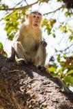 Affe im Wald Stockfotos