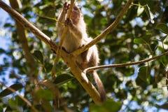 Affe im Wald Stockfoto