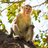 Affe im Wald Lizenzfreie Stockbilder