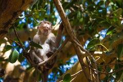 Affe im Wald Lizenzfreies Stockfoto