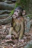 Affe im Wald Stockbilder