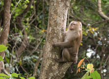 Affe im Wald, Thailand Lizenzfreies Stockfoto