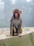 Affe im Wald von Himalaja Lizenzfreies Stockbild