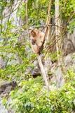Affe im Waldtier Lizenzfreie Stockfotos