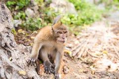 Affe im Waldtier Lizenzfreie Stockfotografie
