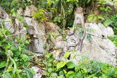 Affe im Waldtier Stockbilder