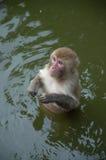 Affe im Wasser Lizenzfreie Stockfotos