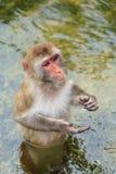 Affe im Zoo Lizenzfreies Stockbild