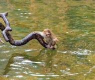 Affe im Zoo Stockbilder