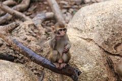 Affe im Zoo Lizenzfreies Stockfoto