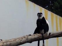Affe im Zoo Lizenzfreie Stockfotografie