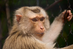 Affe im Zoo Stockbild
