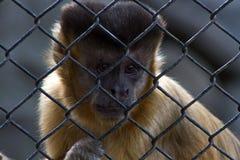 Affe im Zoo Rio de Janeiro Stockfotografie