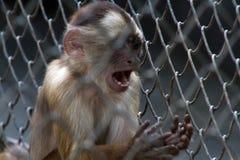 Affe im Zoo Rio de Janeiro Stockfoto