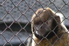 Affe im Zoo Rio de Janeiro Stockbilder