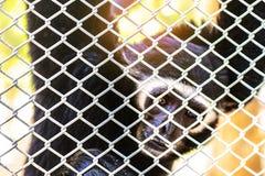 Affe innerhalb des Käfigs Lizenzfreies Stockfoto
