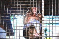 Affe innerhalb eines Käfigs Lizenzfreie Stockbilder