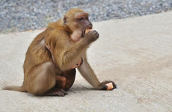 Affe isst Bonbons Lizenzfreie Stockfotos