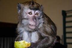 Affe isst eine BIRNE Lizenzfreie Stockfotografie