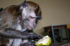 Affe isst eine BIRNE Stockfoto